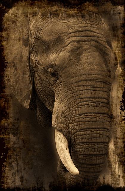 face d'éléphant projeté sur un écran en parchemin multipotentiel