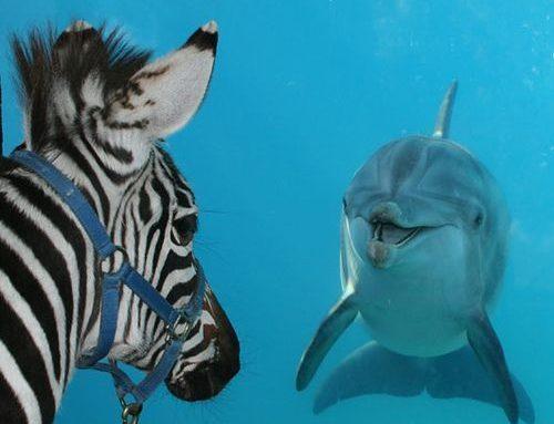 Le secret du dauphin !